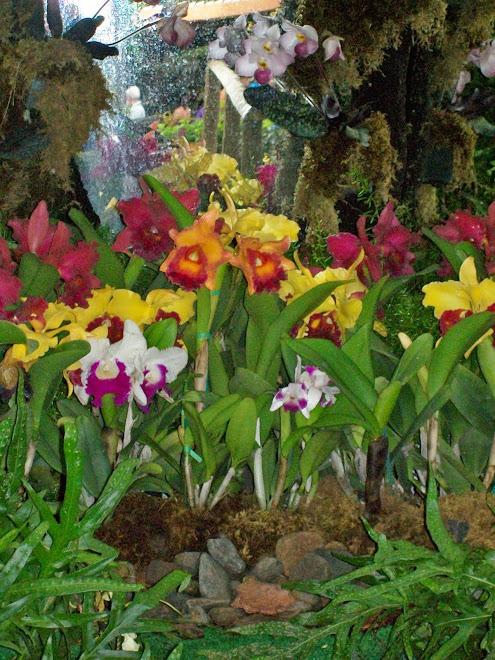 Festival De Las Flores  en  Abonito