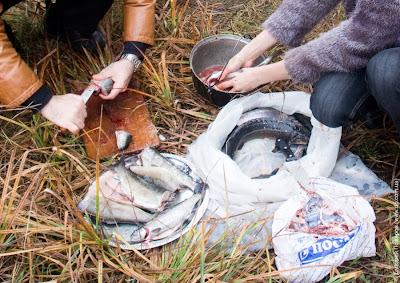 Рыбная ферма в Харьковской области
