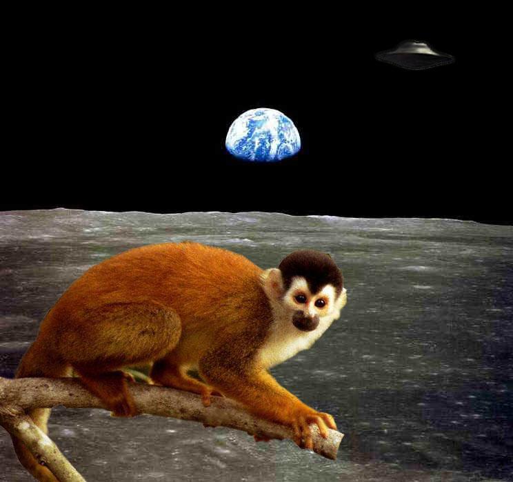 El mono que mandaron al espacio no volvió