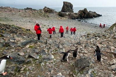 Gentoo_Penguins_Elephant_Island_30
