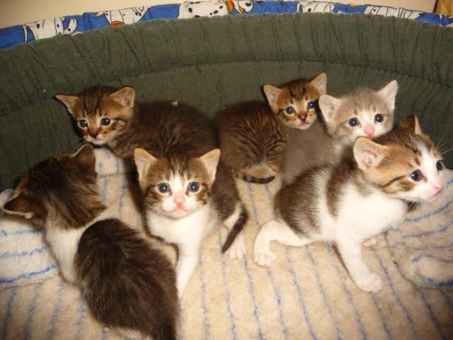 Aquests gatets han estat tots adoptats!