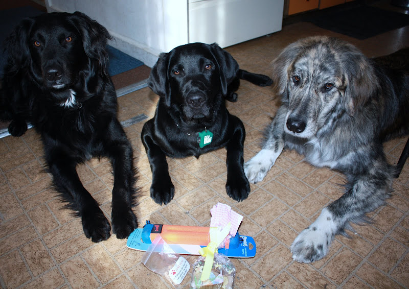 All three boys look longingly at their paw it forward gifts