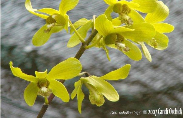 Cagar Alam Kersik Luway Hanya Dijaga 3 Petugas Candi Orchid