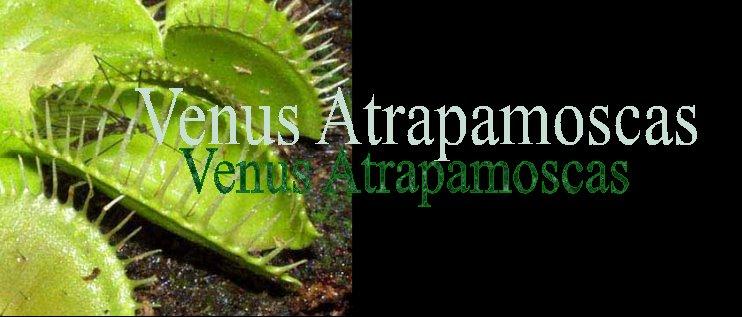 Venus atrapamoscas