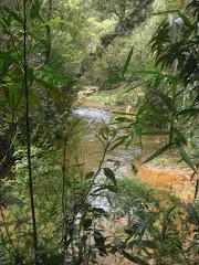 VEJA:Vegetação na APA Capivari Monos