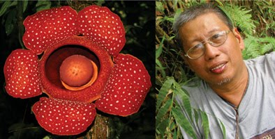 <i>Rafflesia leonardi</i> - honoring an unsung hero of Philippine Botany