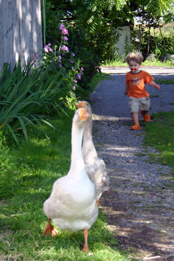 http://1.bp.blogspot.com/_93PHTOMG7uE/S678qW1HT6I/AAAAAAAAD1o/9DKkaybRbOo/s1600/wild-goose-chase.jpg