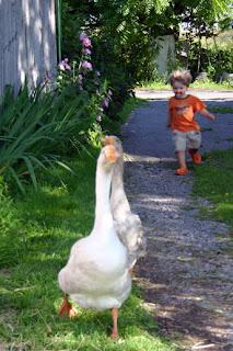 http://1.bp.blogspot.com/_93PHTOMG7uE/S678qW1HT6I/AAAAAAAAD1o/9DKkaybRbOo/s320/wild-goose-chase.jpg
