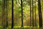 Jia Wood