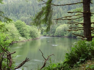 The quiet pool a dam on the siletz river you 39 ve got to for Siletz river fishing