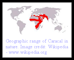 Caracal Distribution