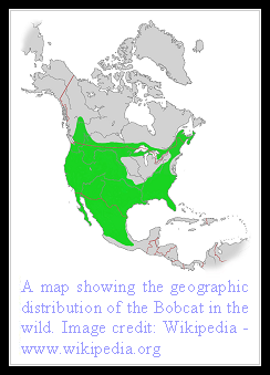 Bobcat Distribution