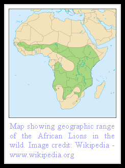 African Lion distribution