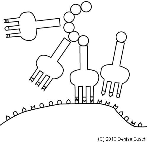 Nachhilfe Online: Die Proteinbiosynthese