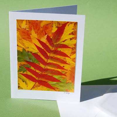 jeanne-selep-imaging autumn summac card