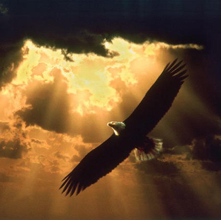 http://1.bp.blogspot.com/_9D8aFWOWGa0/SwdoPj5xMtI/AAAAAAAAABg/_Znip6eB1z4/s1600/soaring_eagle_150.jpg