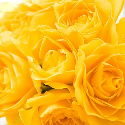 download free wallpapers for Apple iPad Yellow roses
