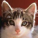 Mačka download besplatne slike pozadine za mobitele