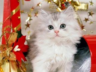 Božićne slike mačke besplatne pozadine za mobitele download