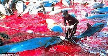 No a la matanza de delfines
