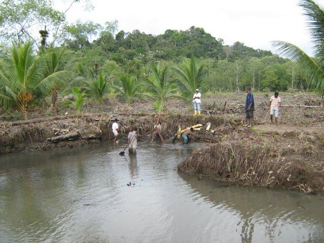 Acuicultura En El Pacifico Colombiano Actividades De Para