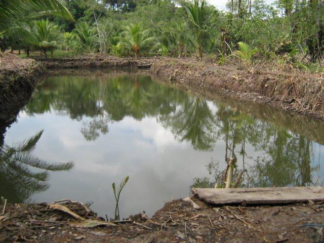 Acuicultura En El Pacifico Colombiano