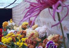 Flowers in Ilam