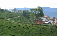 Ilam Bazaar Through Beautiful Tea Garden