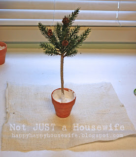 9a Pine Tree Topiary Tutorial