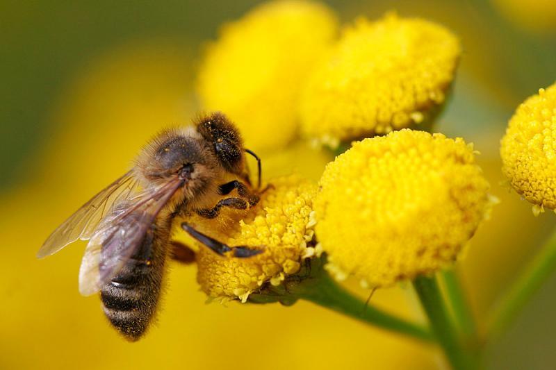 [abelhas]