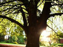 TREES REPRESENT