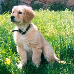 Charlie as a puppy in our front yard in Aspen