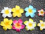 Bunga Jepun Bijian