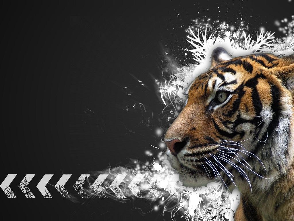 http://1.bp.blogspot.com/_9JS1XqG9_G8/TCHzVg4HKTI/AAAAAAAAAQU/KtY1NAAxM2o/s1600/Tiger_Vector_Normalized.jpg