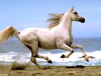 قصـــة الحصان شروط السعادة الخمسة