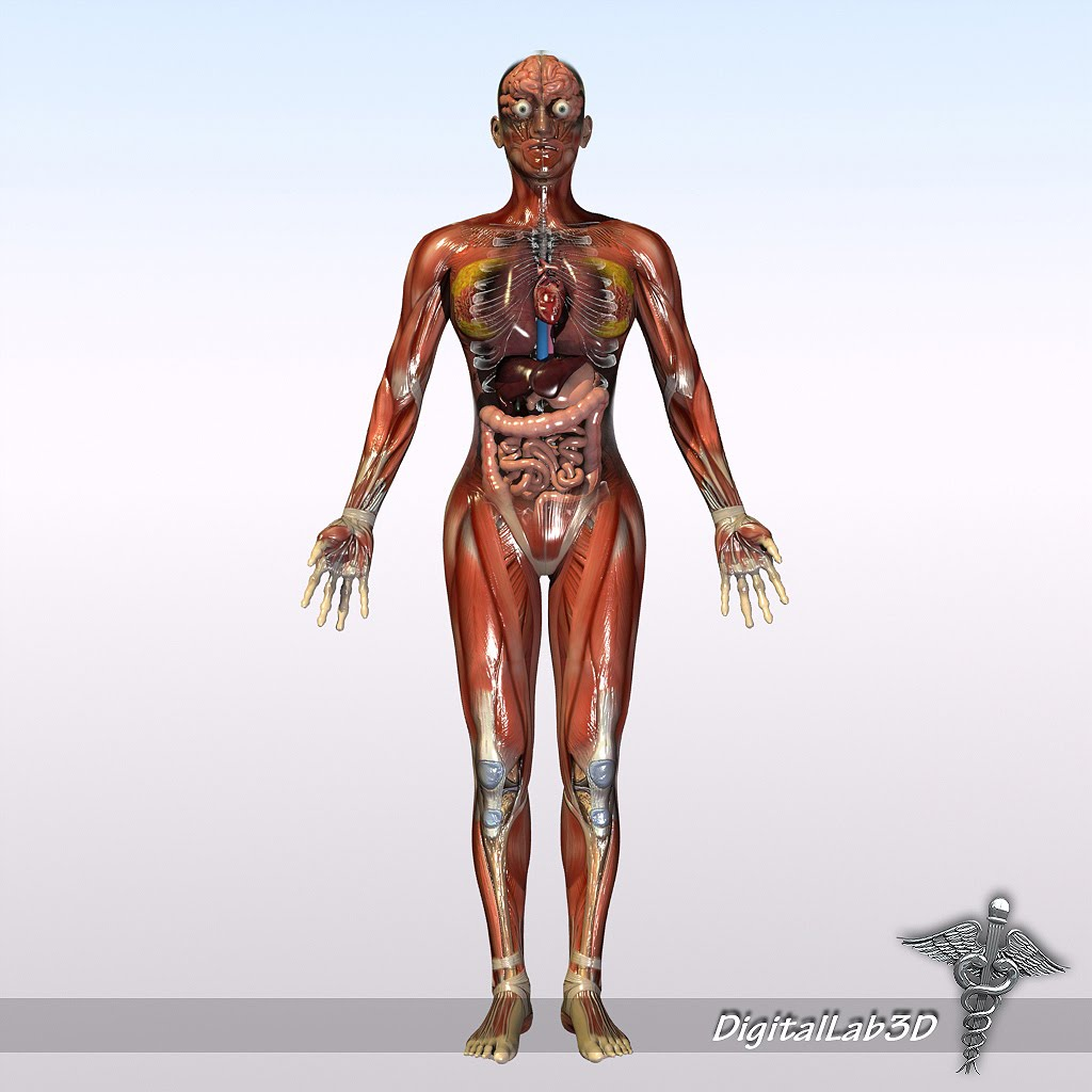 Digitallab3d Human Male And Female Anatomy