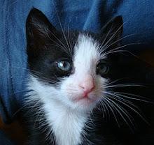 Yoshi Tuxedo - Adoptado pela Cláudia!