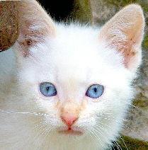 Gaston Miau-Miau - Adoptado pelo Rui e Flor!