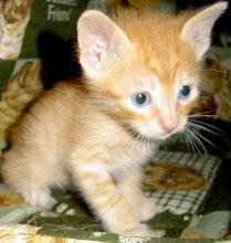 Capuccino Miau-Miau - Adoptado pela Ana F.
