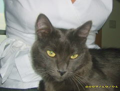 Sushi (ex Cinza) - Adoptado pela Joana!