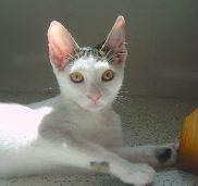 Menta (Ex-Sam) - Adoptada pela Rita!