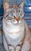 Lady Blue - Adoptada pela Tia!!! (Fevereiro 2009)