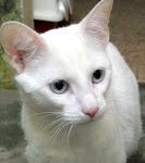 Sr Neves - Adoptado pela Ana!!! (Maio 2009)