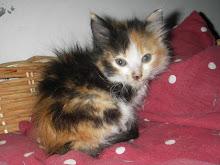 Teresinha - Adoptada pela Carla!!! (Outubro 2009)