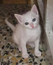 Ritinha - Adoptada pela Elisabete!!! (Outubro de 2009)