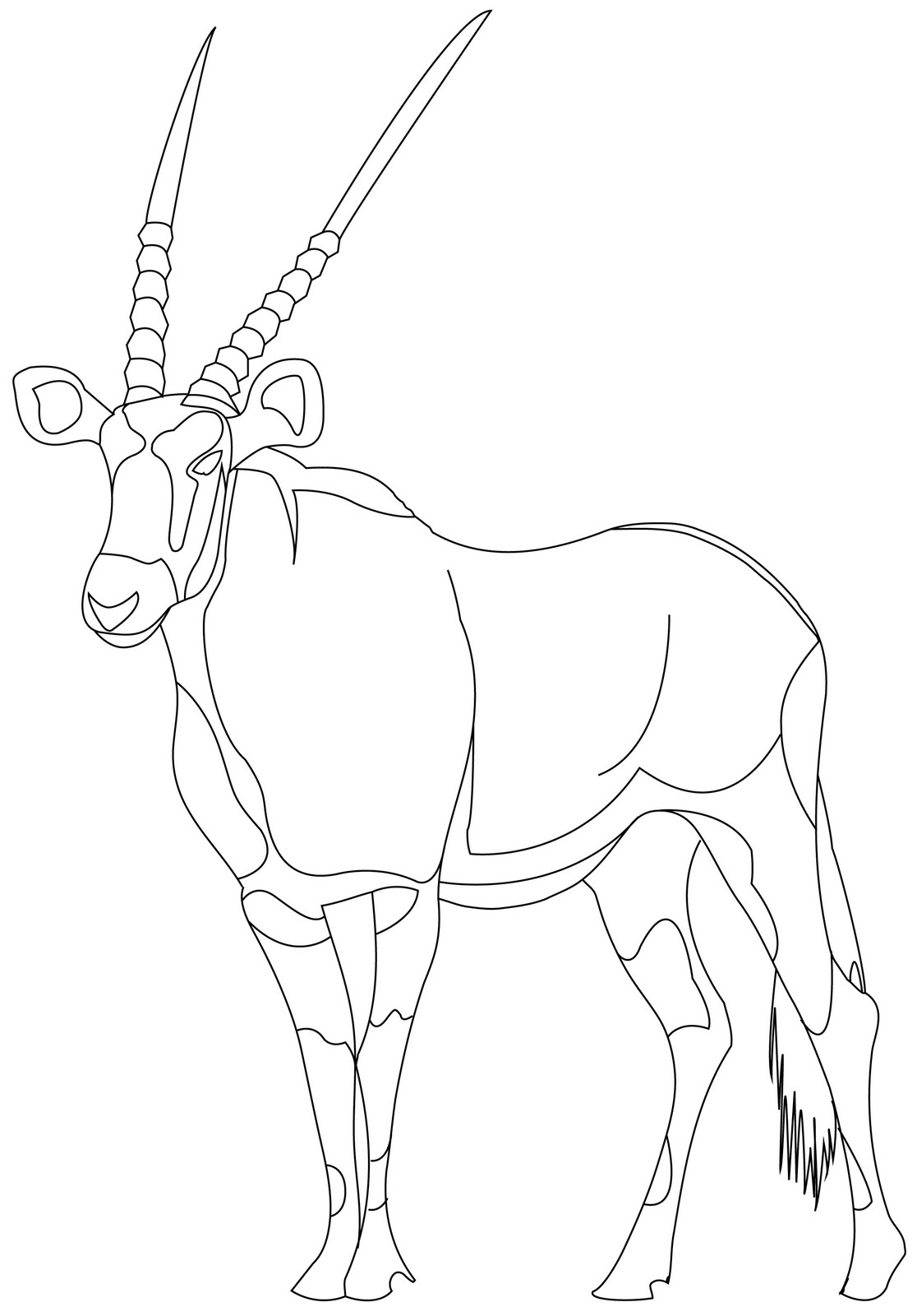 Antelope Face Drawing Gemsbok Face Outline Drawing