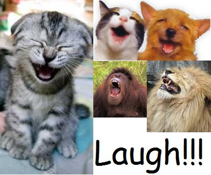 funny and laugh: funny jokes to make a girl laugh