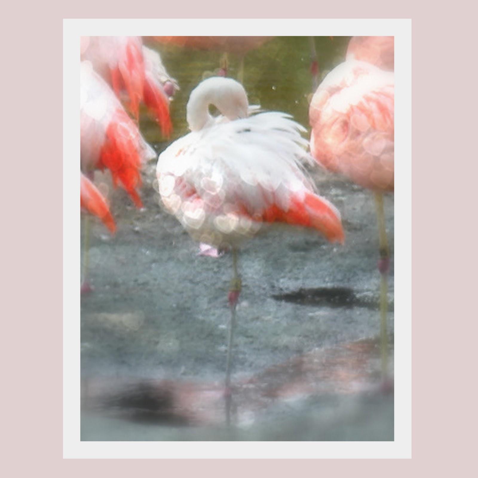 http://1.bp.blogspot.com/_9LxLZudP_6w/TUuaQaKhGXI/AAAAAAAAHZw/laufoztLNyQ/s1600/pink+flamingos.jpg