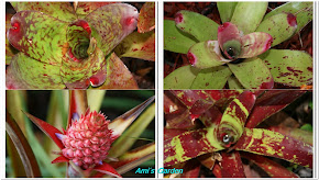 bromeliads
