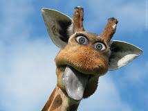 η Giraffe στο Facebook